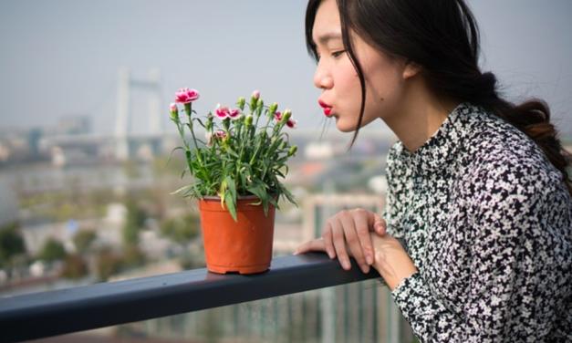 EuroDeco Brussels is nieuwe beurs voor de sierteelt en decosector